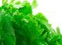 野菜の組み合わせ方